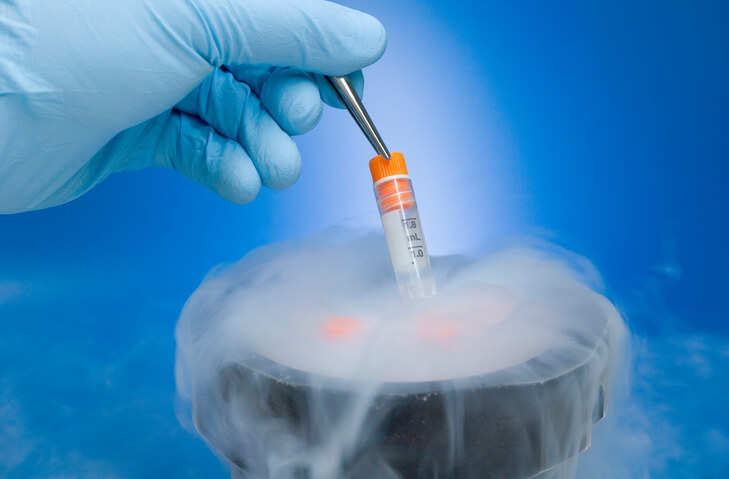 Which is More Successful: A Fresh or Frozen Embryo Transfer?